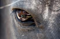 Hesteøjet